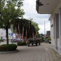 005-Bild-Maibaum_stellen-2
