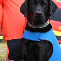 BRH-Rettungshundestaffel_Bild-04