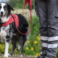 BRH-Rettungshundestaffel_Bild-05