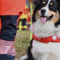 BRH-Rettungshundestaffel_Bild-06