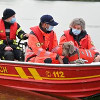 BRH-Rettungshundestaffel_Bild-14