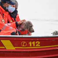 BRH-Rettungshundestaffel_Bild-15