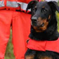 BRH-Rettungshundestaffel_Bild-16