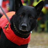 BRH-Rettungshundestaffel_Bild-18