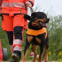 BRH-Rettungshundestaffel_Bild-21