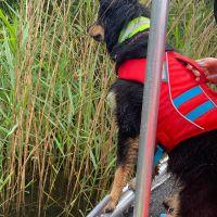 BRH-Rettungshundestaffel_Bild-27