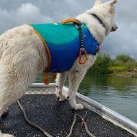 BRH-Rettungshundestaffel_Bild-30